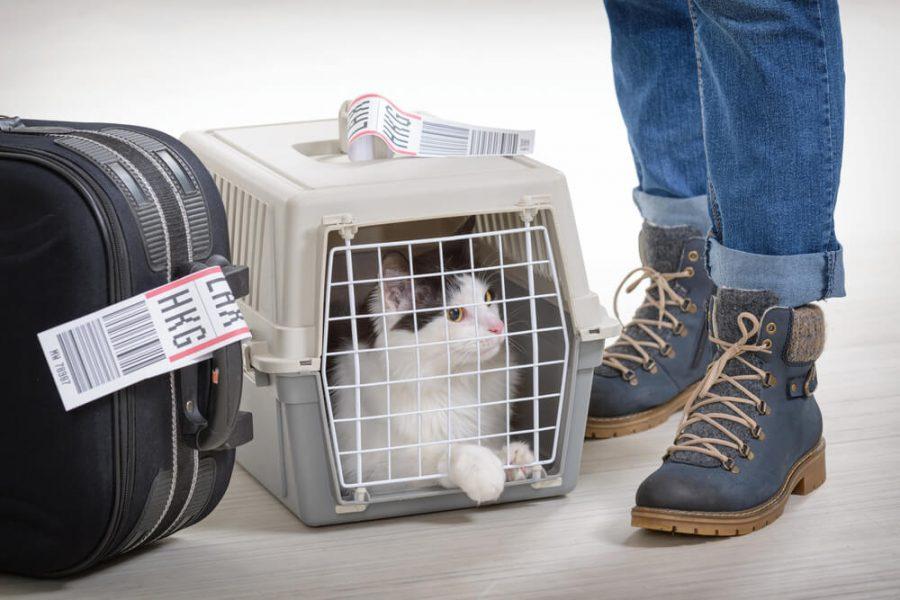 Viajar en avión con tu mascota, Consejos para viajar en avión con tu mascota
